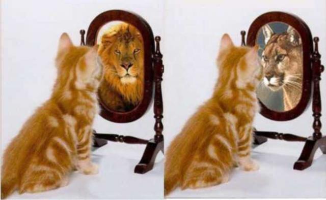http://www.overmundo.com.br/uploads/guia/multiplas/1179587174_gato_no_espelho.jpg
